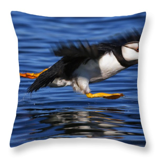 Horned Puffin  Fratercula Corniculata Throw Pillow by Marion Owen
