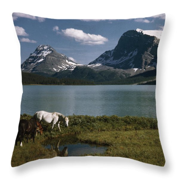 Horses Graze In A Lakeside Meadow Throw Pillow by Walter Meayers Edwards