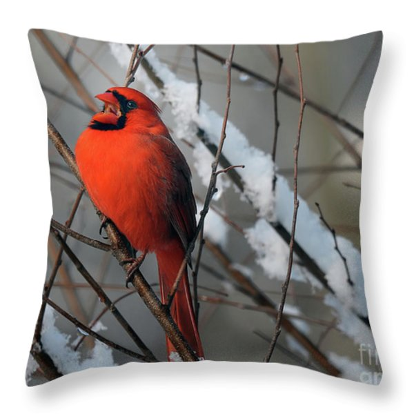 I Am So Ready For Spring Throw Pillow by Lois Bryan