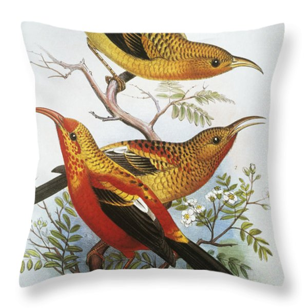 IIwi Throw Pillow by Hawaiian Legacy Archive - Printscapes