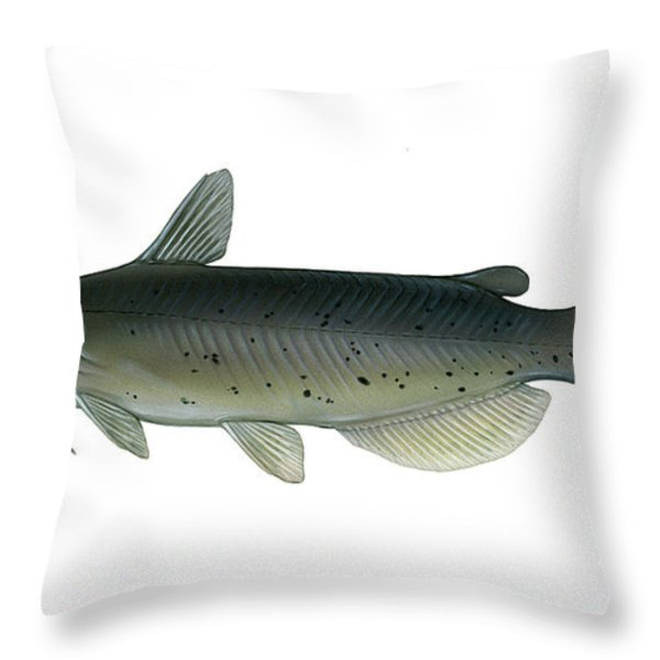 Illustration Of A Channel Catfish Throw Pillow by Carlyn Iverson
