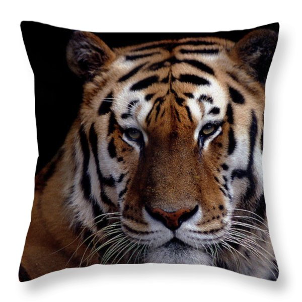 Intense Throw Pillow by Skip Willits