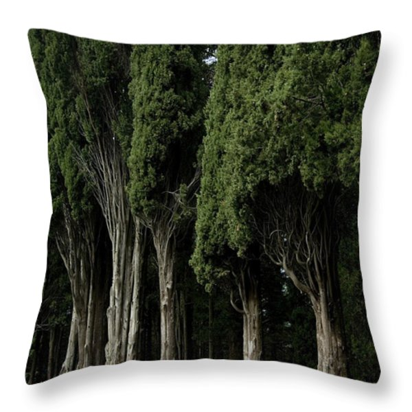 Italian Cypress Trees Line A Road Throw Pillow by Todd Gipstein