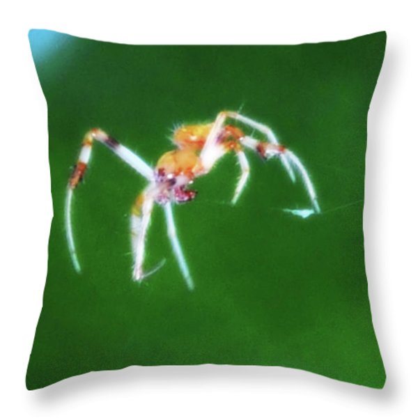 Itsy Bitsy Spider Throw Pillow by Bill Cannon