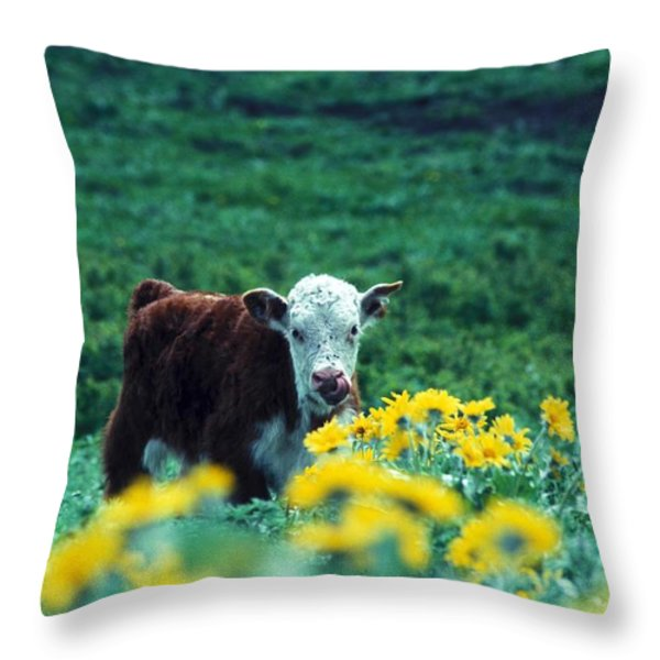 Juvenile White-faced Hereford Throw Pillow by Paul Nicklen