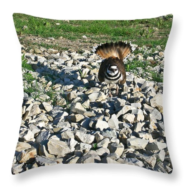 Killdeer 3 Throw Pillow by Douglas Barnett