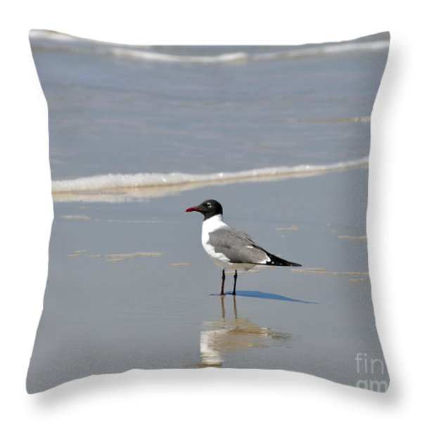 Laughing Gull Reflecting Throw Pillow by Al Powell Photography USA