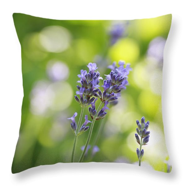 Lavender Garden Throw Pillow by Frank Tschakert