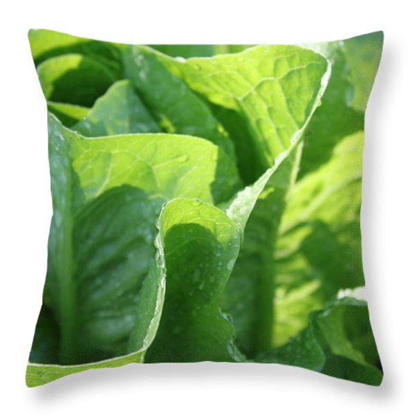 Leaf Lettuce Throw Pillow by Lauri Novak