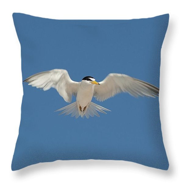 Least Tern 2 Throw Pillow by Kenneth Albin