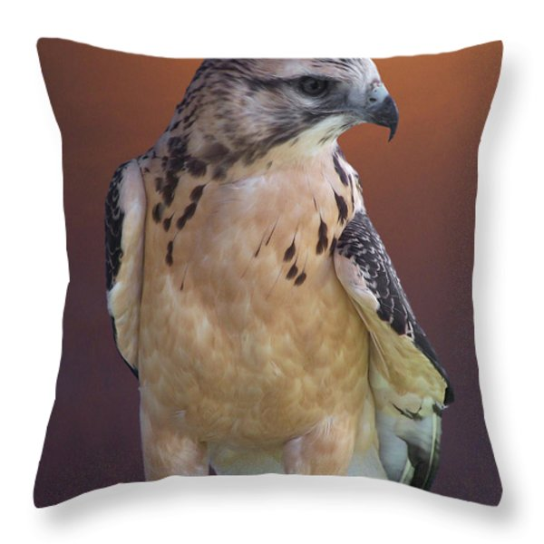 Light morph immature Swainsons Hawk Throw Pillow by Ernie Echols