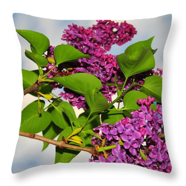 Lilacs Throw Pillow by Catherine Reusch  Daley