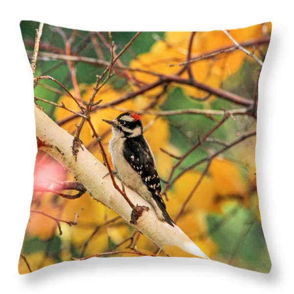 Little Downy In Autumn Throw Pillow by Donna Kennedy