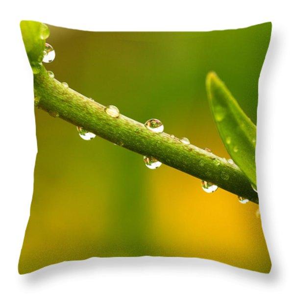 Little Drops Of Rain Throw Pillow by Amanda Kiplinger