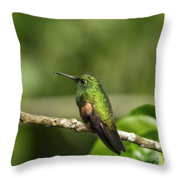 Little Hummingbird Throw Pillow by Heiko Koehrer-Wagner