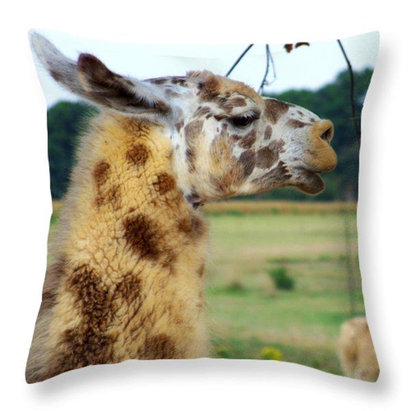 Llama Throw Pillow by Jai Johnson