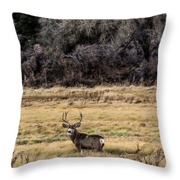 Throw Pillow Trends 2015 : Lone Muledeer Buck 12-23-2015 Photograph by Renny Spencer