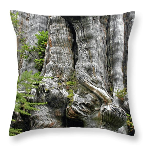 Long Views - Giant Western Red Cedar Olympic National Park Wa Throw Pillow by Christine Till