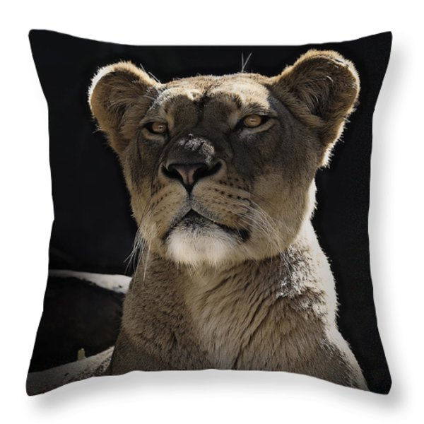 Magnificent Lioness Throw Pillow by Sheila Smart