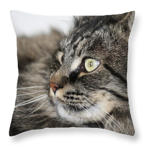 Maine Coon Cat Throw Pillow by Mary-Lee Sanders