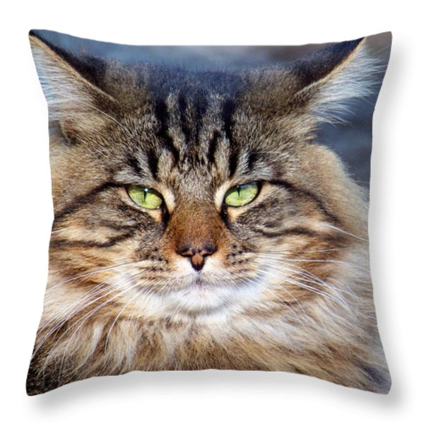 Maine Coon I Throw Pillow by Jai Johnson