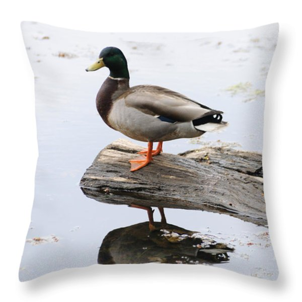 Male Mallard Duck With His Reflection Throw Pillow by Darlyne A. Murawski