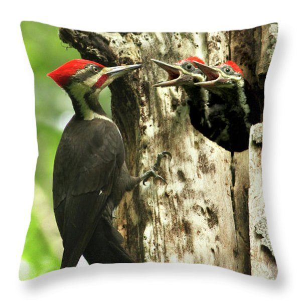 Male Pileated Woodpecker at nest Throw Pillow by Mircea Costina Photography