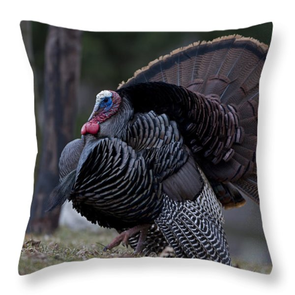 Male Wild Turkey, Meleagris Gallopavo Throw Pillow by John Cancalosi
