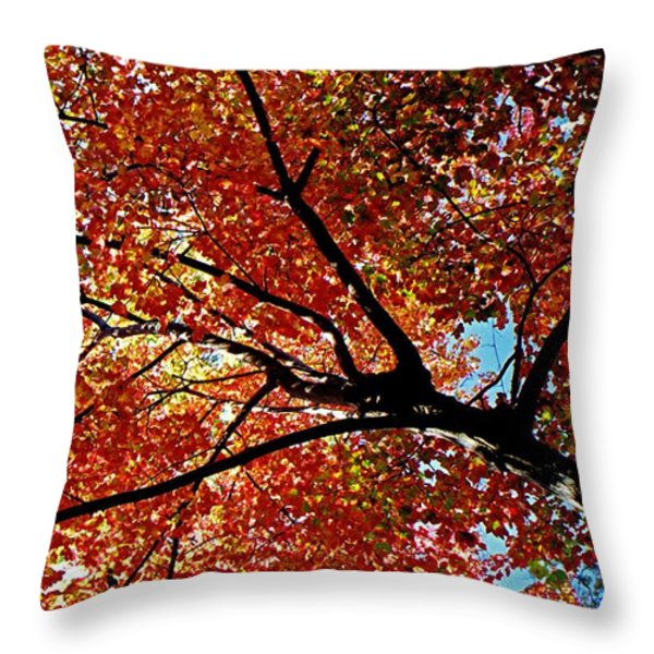 Maple Tree In Autumn Glow Throw Pillow by Juergen Roth