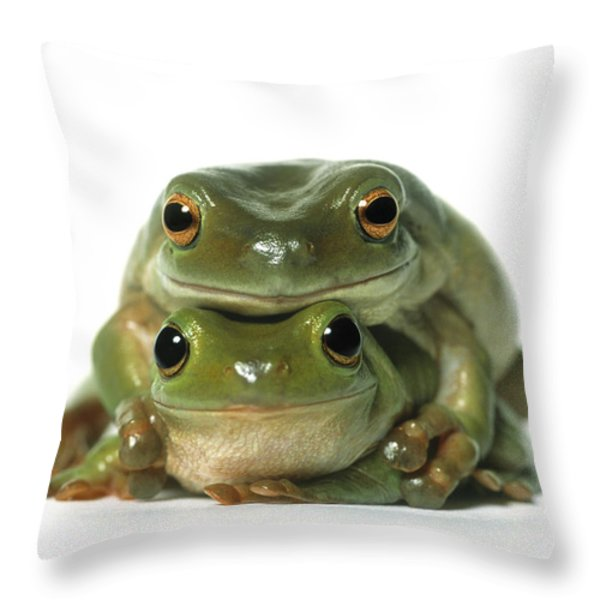 Mating Frogs Throw Pillow by Darwin Wiggett