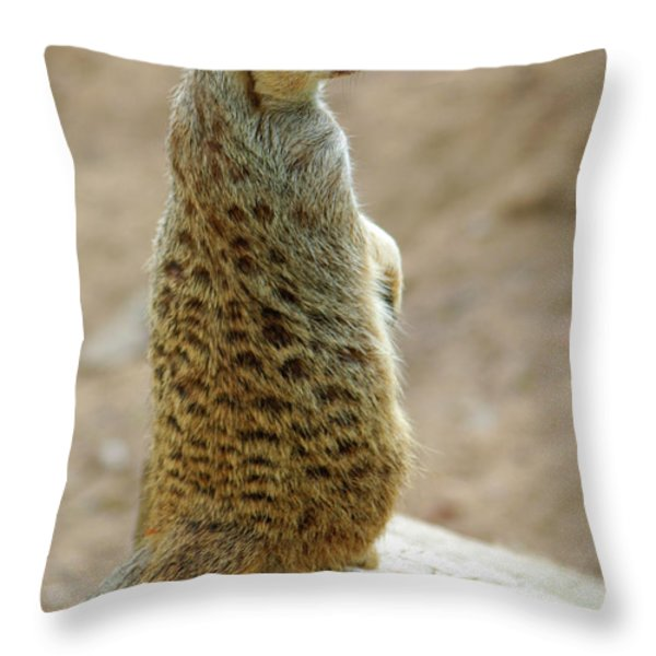 Meerkat Portrait Throw Pillow by Carlos Caetano