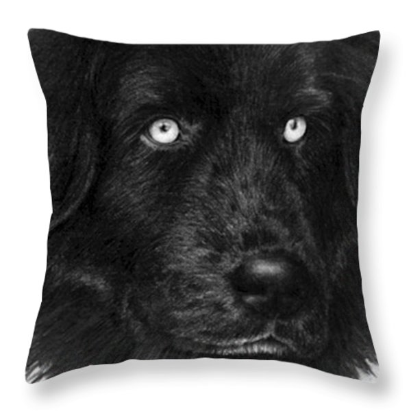 Merlin Throw Pillow by Rachel Christine Nowicki