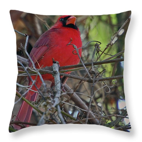 Mister Cardinal Throw Pillow by DigiArt Diaries by Vicky B Fuller