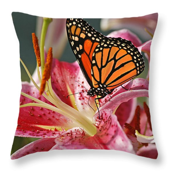 Monarch On A Stargazer Lily Throw Pillow by Cindi Ressler