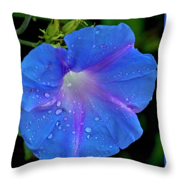 Morning Glory Dew Throw Pillow by Dennis Reagan