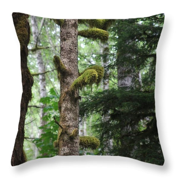 Moss-draped trees on Tiger Mountain WT USA Throw Pillow by Christine Till