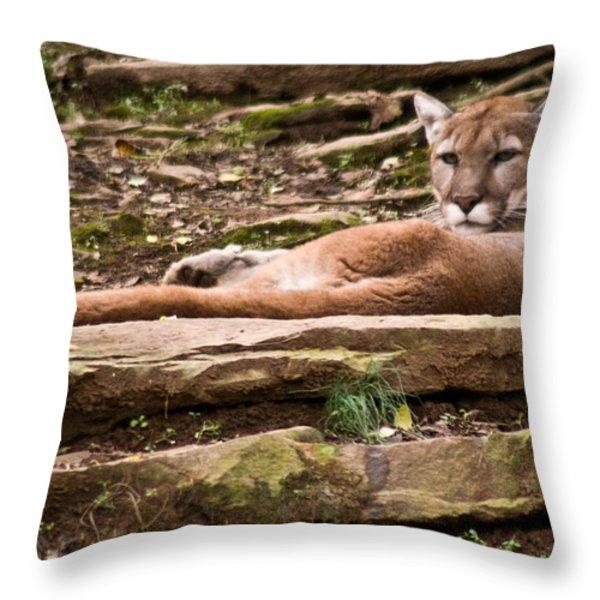 Mouontain Lion Resting Throw Pillow by Douglas Barnett