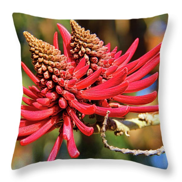 Naked Coral Tree Flower Throw Pillow by Mariola Bitner