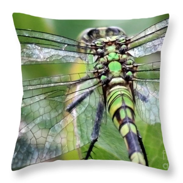 Natural Stained Glass Throw Pillow by Carol Groenen