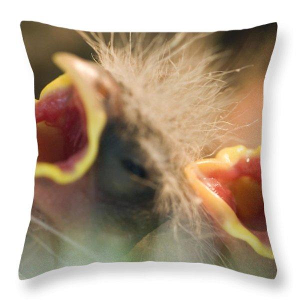 Nesting House Finch Chicks Carpodacus Throw Pillow by Rich Reid