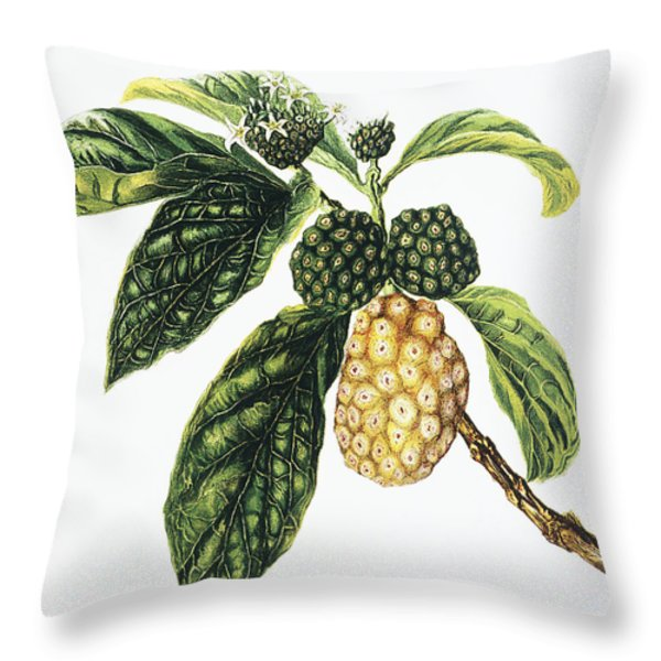 Noni Fruit Throw Pillow by Hawaiian Legacy Archive - Printscapes
