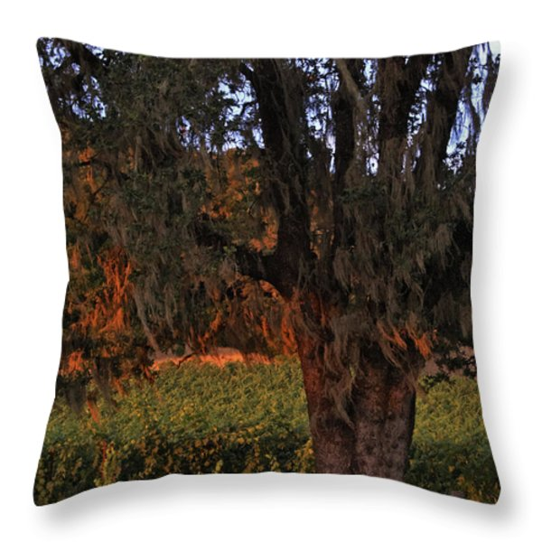 Oak Tree and Vineyards in Knight's Valley Throw Pillow by Charlene Mitchell