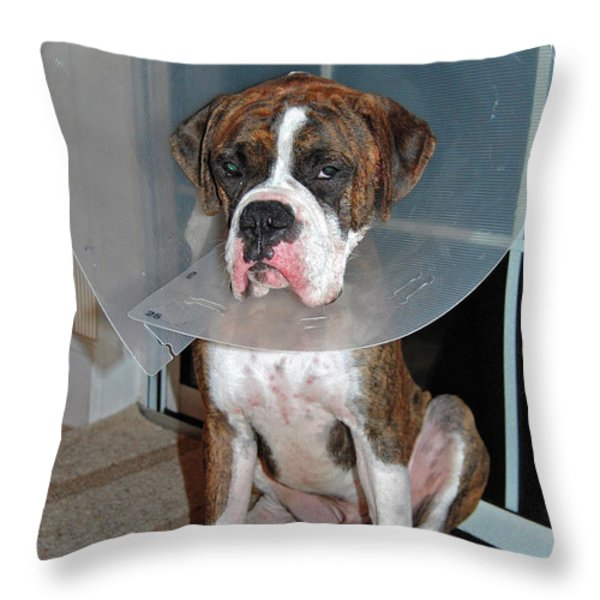 One Biffed Boxer Throw Pillow by DigiArt Diaries by Vicky B Fuller