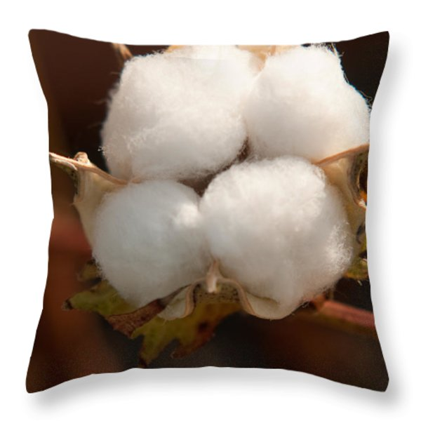 Open Cotton Boll Throw Pillow by Douglas Barnett