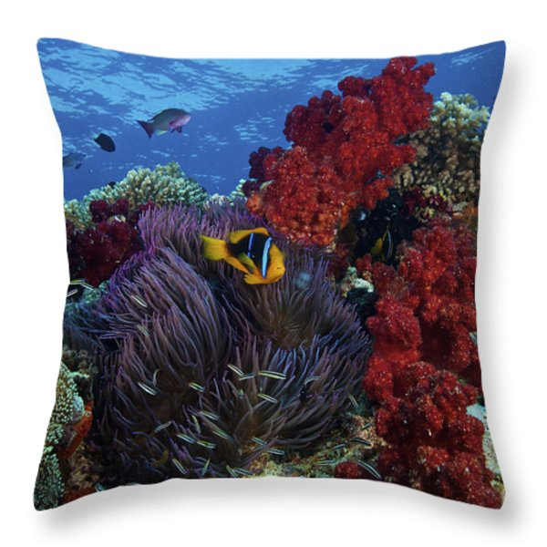 Orange-finned Clownfish And Soft Corals Throw Pillow by Terry Moore