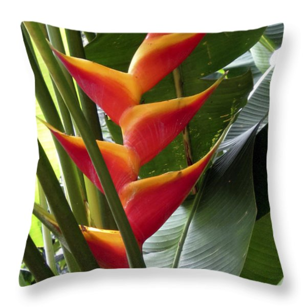 Orange Paradise Throw Pillow by Cheryl Young