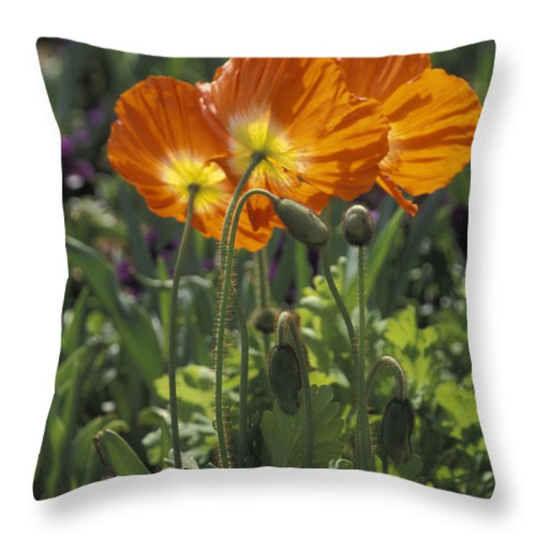 Orange Poppy Flower In The Dallas Throw Pillow by Richard Nowitz