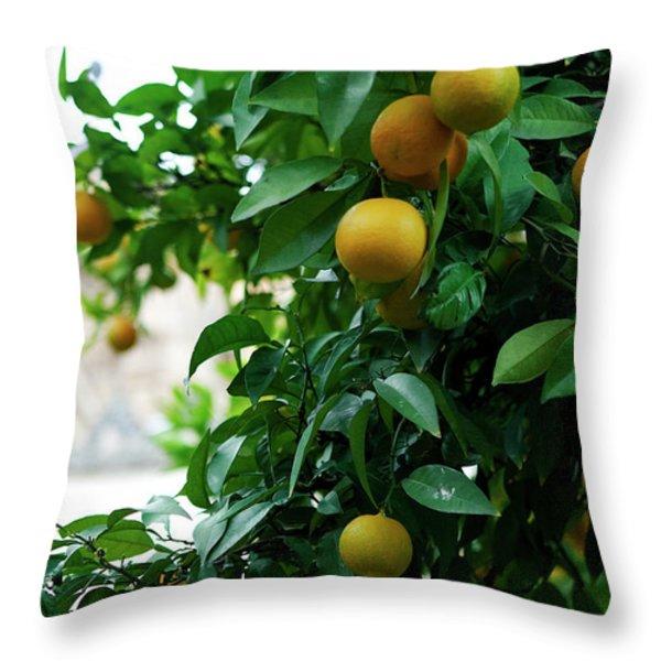 Orange Tree Throw Pillow by Lorraine Devon Wilke