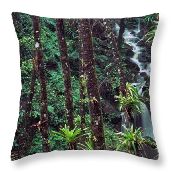 Palm Trunks and Waterfall El Yunque Throw Pillow by Thomas R Fletcher