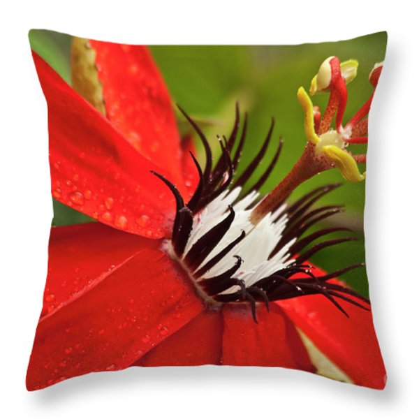 Passionate flower Throw Pillow by Heiko Koehrer-Wagner
